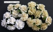**PREORDER** Wild Orchid Crafts MIXED WHITE/CREAM MULBERRY PAPER CARNATION FLOWERS