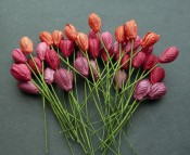 **PREORDER** Wild Orchid Crafts MIXED RED TONE MULBERRY PAPER TULIP FLOWERS