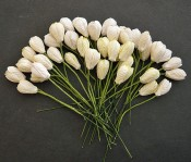 **PREORDER** Wild Orchid Crafts MIXED WHITE/CREAM MULBERRY PAPER TULIP FLOWERS