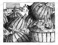 PUMPKINS Cling Mounted Rubber Stamp by Gary Robertson from Impression Obsession
